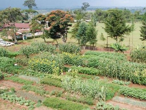 MHAC gardens